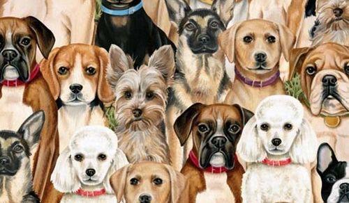 evcil hayvan köpek ırkları